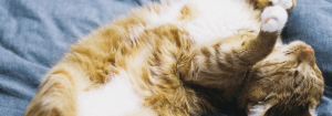 Calming-Products-for-Pets