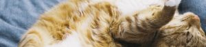 Calming Products for your pets