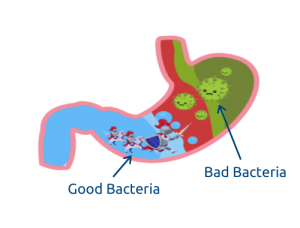 Disruption of Natural Intestinal Flora