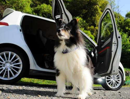 Dog-Travel-Accessories-from-NVS
