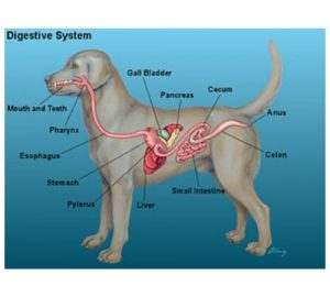 General Sources of Gastrointestinal Upset in Dogs