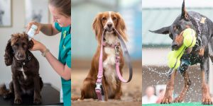 National-Veterinary-Services-Product-Range