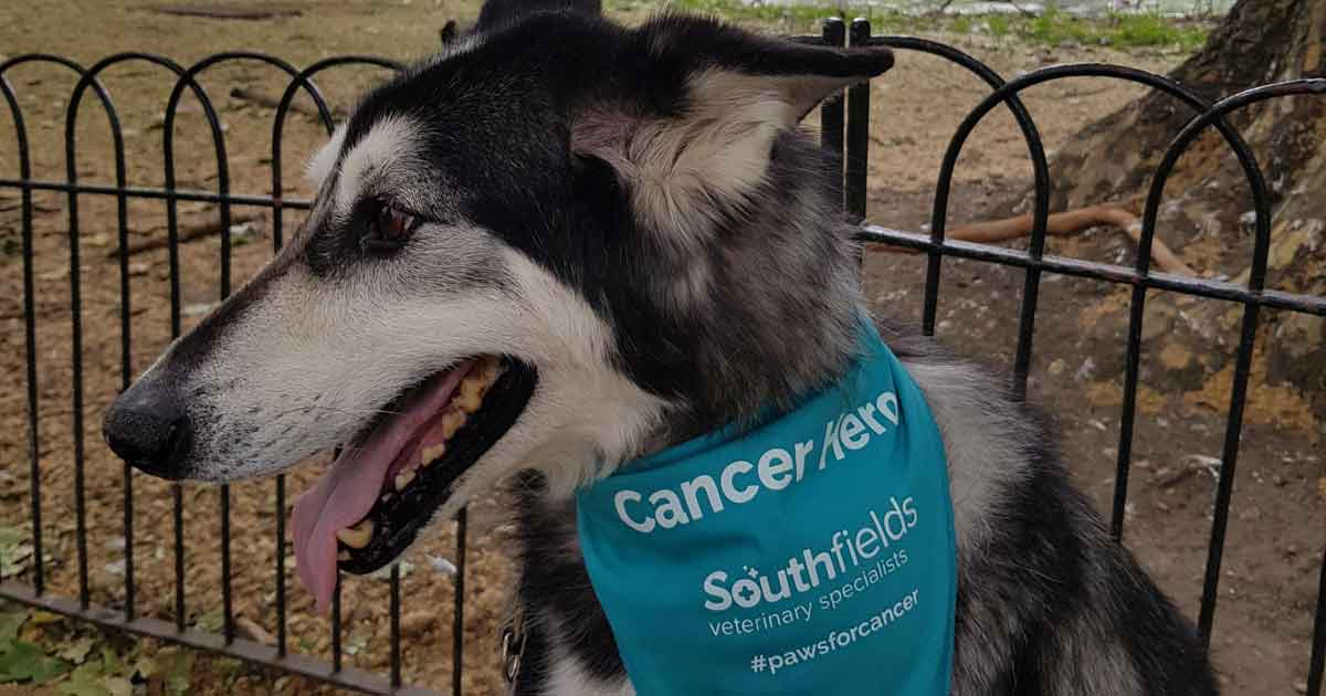 Southfields-Cancer-Hero-Zeus